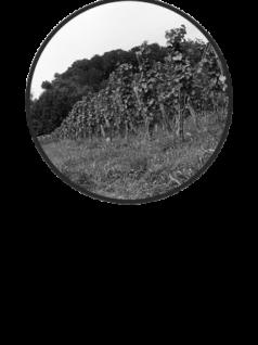 RZ-Winzer-Button_DEF_19